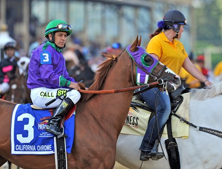 California Chrome, with Victor Espinoza up, venture towards the starting gate while exiting the post parade.