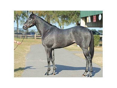 2-year-old Smart Strike colt brought $1.8 million at the Ocala Breeders' Sales Co. March sale of 2-year-olds in training.
