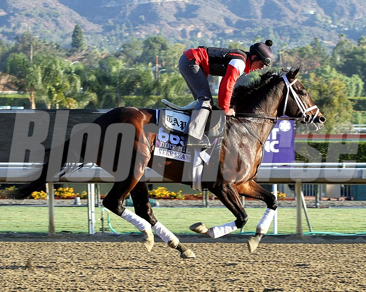 Verrazano on the track at Santa Anita Park on October 30, 2013. Photo By: Chad B. Harmon