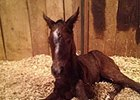 Soldat filly out of Magnificent Melody, born Jan. 6.