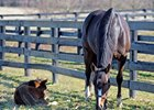Rachel Alexandra and foal