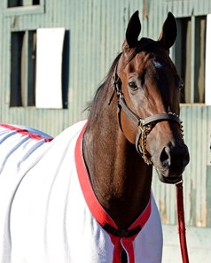 Big Macher in 2014