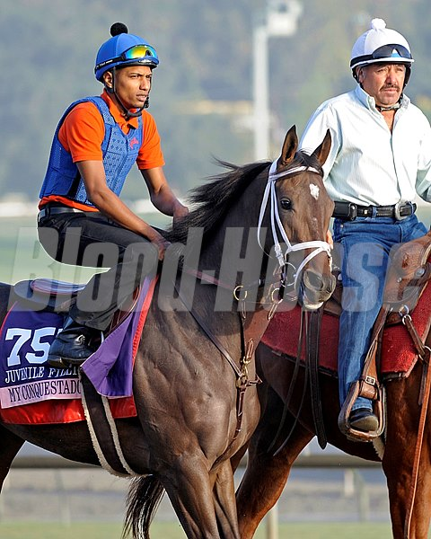 Caption:  My Conquestadory