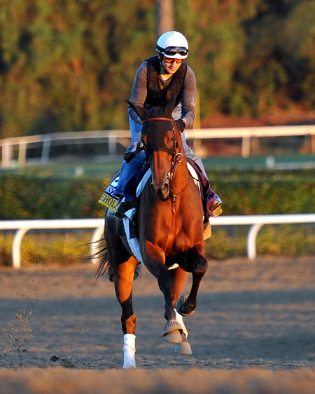Beholder works out in preparation for the 2013 Breeders' Cup at Santa Anita Park.