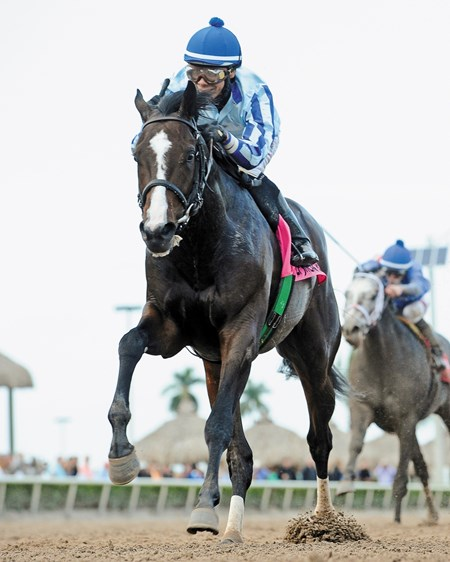 New York-bred Upstart proved his class at Gulfstream Park, tracking pacesetter Bluegrass Singer to the final turn and then drawing away impressively to win the $400,000 Grade II Holy Bull Stakes by 5 1/2 lengths.