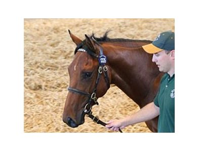 Lot 1335, an Irish-bred colt by Australia's current leading sire Fastnet Rock, sold for 180,000 guineas.