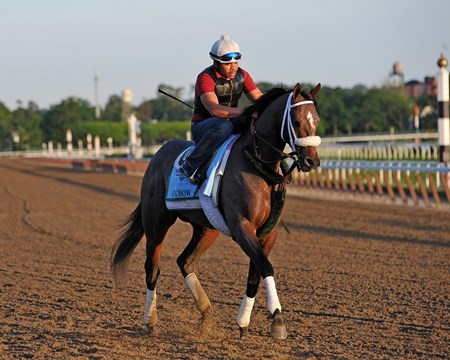 Preakness Stakes winner Oxbow, at Belmont Wednesday morning...
