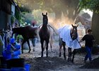 Horses in the morning at Saratoga Race Course in Saratoga Springs, N.Y.