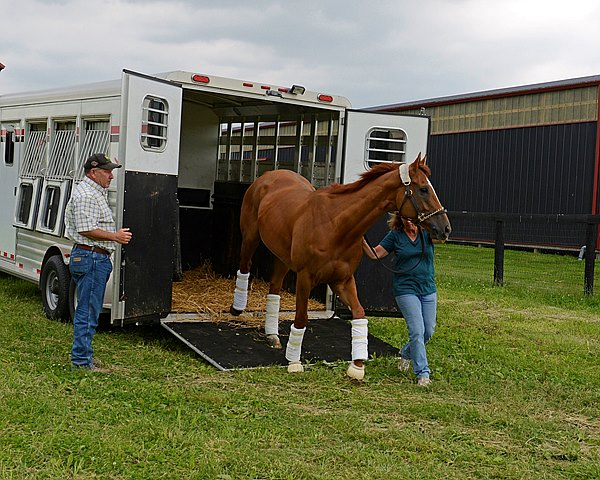 Amy LoPresti leads Wise Dan off the van as Charlie LoPresti looks on. Wise Dan returned to Forest Lane Farm after colic surgery at Rood and Riddle Equine Hospital in Lexington, Kentucky.