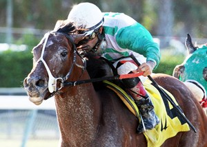 Csaba wins his second Fred W. Hopper Handicap in the 2013 edition at Calder Race Course