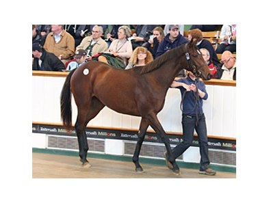 A Galileo full sister to 2012 Epsom Oaks winner Was sold for 5 million guineas at the Tattersalls October yearling sale.