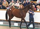 Galileo Filly Smashes World Record Price