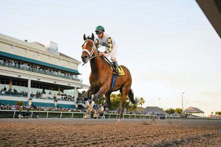 Mucho Macho Man wins the Florida Sunshine Millions Classic Stakes at Gulfstream Park on January 18, 2014.