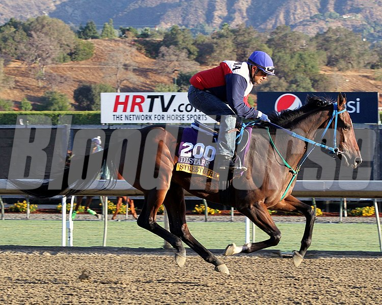 Street Girl on the track at Santa Anita Park on October 29, 2013. Photo By: Chad B. Harmon