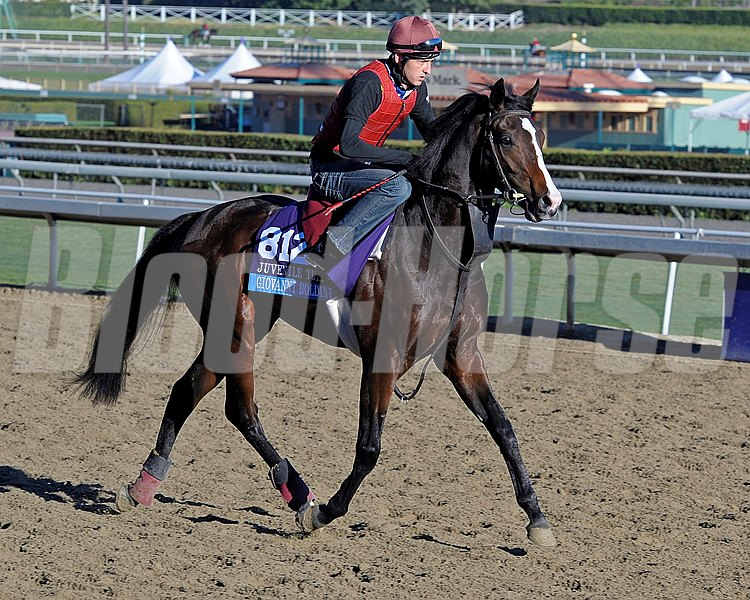 Giovanni Boldini. Breeders' Cup horses and connections at Santa Anita near Acadia, California, preparing for Breeders' Cup raceways on Nov. 1 and Nov. 2, 2013. BCWorks1Jpegs_10_31_13 image1008 Photo by Anne M. Eberhardt