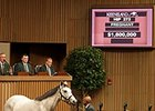 Ciao Bella was purchased for $1.6 million at the Keeneland November breeding stock sale.