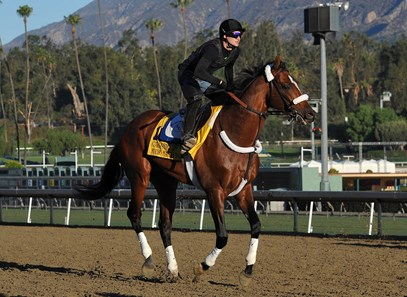 Mucho Macho Man...