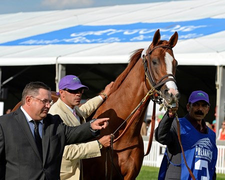 Alan Sherman, left, with groom Raul Rodriguez, right, lead California Chrome to paddock.