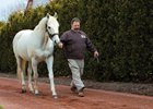 Tapit: 2014 Leading Sire