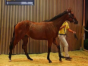 Mastercraftsman Son Top Price at Arqana