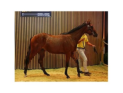 Lot 32 is a colt by Mastercraftsman and sold for €320,000 ($437,728 in United States funds).
