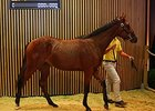 Lot 32 is a colt by Mastercraftsman and sold for âââ'¬Å¡Ã'¬320,000 ($437,728 in United States funds).