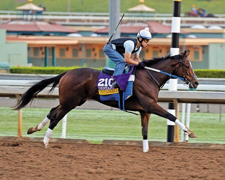 Untapable works out at Santa Anita in preparation for the Breeders' Cup.