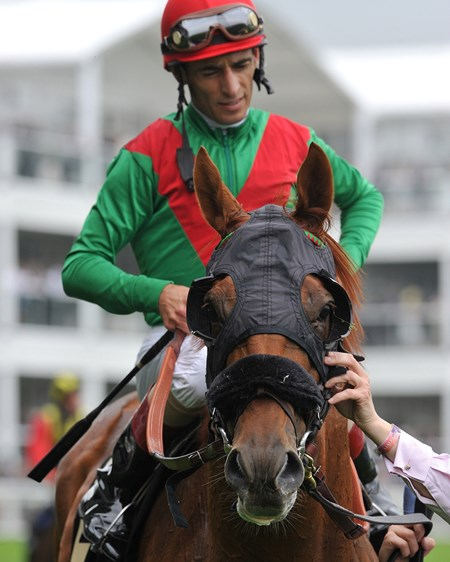Animal Kingdom and John Velazquez at Royal Ascot after the Queen Anne Stakes June 18, 2013.