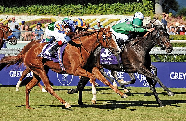 MARAM (#3), ridden by Jose Lezcano, holds off Heart Shaped(#12) and pacesetter Laragh, to win the Breeders Cup Juvenile Filly Turf.