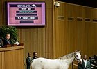 Egg Drop Sells for $1.9 Million at Keeneland