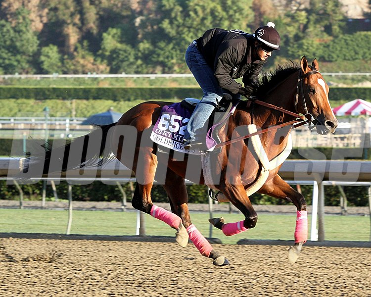 Goldencents on the track at Santa Anita Park on October 30, 2013. Photo By: Chad B. Harmon