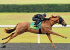 Scat Daddy Filly Turns Heads With OBS Breeze