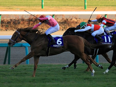 Asia Express, a Florida-bred son of Henny Hughes, took to the turf for the first time in the Asahi Futurity (Jpn-I) at Nakayama racecourse in Japan and kept his perfect record intact with a surprising burst of speed in the stretch.