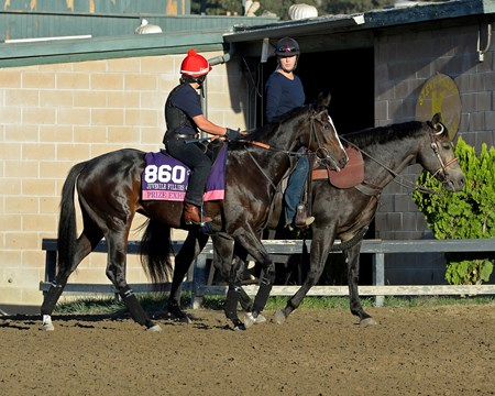Caption:  Prize Exhibit