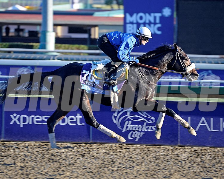 Diamond Bachelor preps for the Breeders' Cup at Santa Anita.