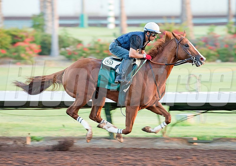 Kentucky Derby and Preakness winner California Chrome's 4 furlong workout at Los Alamitos Race Course last week.