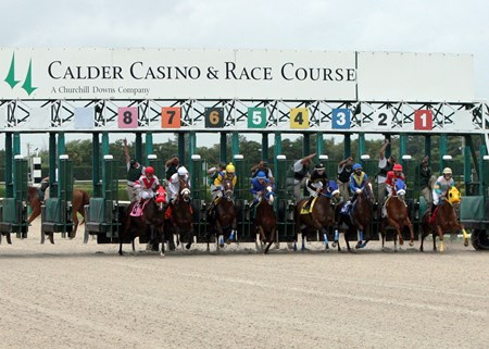 Start of the Chispiski Stakes at Calder Race Course in Miami Gardens, Florida.