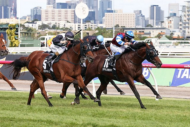 Training partners David Hayes and Tom Dabernig enjoyed a one-two finish in the Australian Cup (Aus-I) at Flemington as Spillway got to the finish line just a whisker ahead of stablemate Extra Zero.