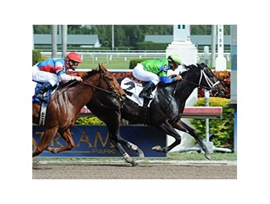 "Boys At Tosconova outfinishes Groupie Doll at Gulfstream Park on Jan 27.<br><a target=""blank"" href=""http://www.bloodhorse.com/horse-racing/photo-store?ref=http%3A%2F%2Fpictopia.com%2Fperl%2Fgal%3Fprovider_id%3D368%26ptp_photo_id%3D9805154%26ref%3Dstory"">Order This Photo</a>"