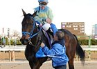 Jockey Jackie Davis Involved in Aqueduct Fall