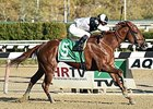 Jacaranda wins the Tempted Stakes.