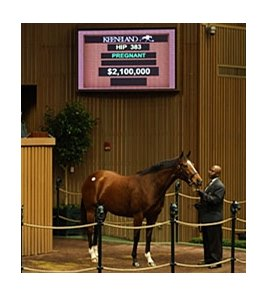 Love Me Only sold for $2.1 million during the Nov. 8 session of the Keeneland November breeding stock sale.