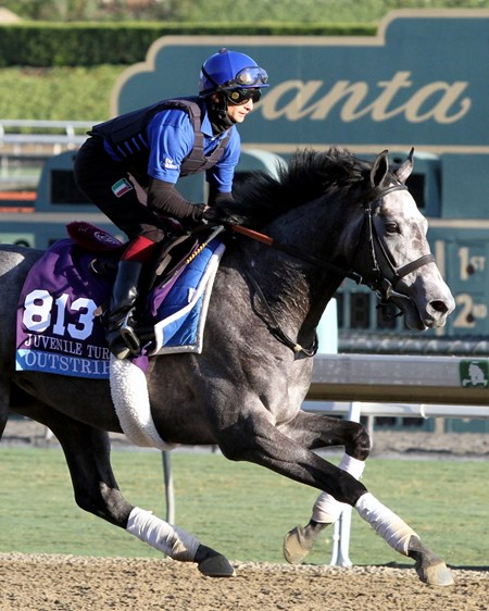 Outstrip on the track at Santa Anita Park on October 29, 2013. Photo By: Chad B. Harmon