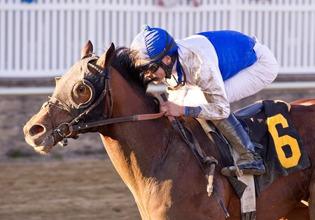 Mr Palmer ridden by Junior Alvarado wins the $150,000 Private Terms Stakes for three-year olds at Laurel Park on Saturday, March 9 2013.