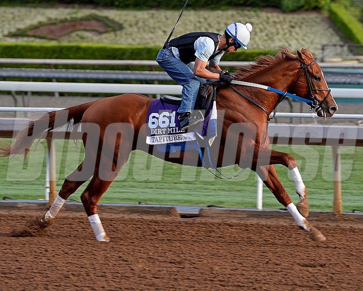 Tapiture  on Oct. 26, 2014, at Santa Anita in preparation for the Breeders' Cup.