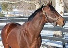 California Sire Game Plan Euthanized