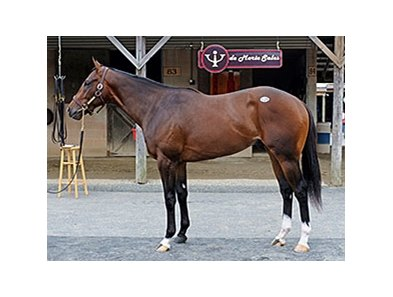 Hip 128, a bay colt by Unbridled's Song, attracted a final bid of $330,000 at the Fasig-Tipton's Midlantic 2YOIT sale.