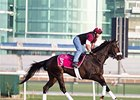 My Johnny Be Good on the Meydan training track on Friday morning.