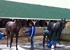 Bath Time for Frac Daddy and Java's War