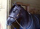 El Kabeir at the barn March 8, following his Gotham Stakes win.
